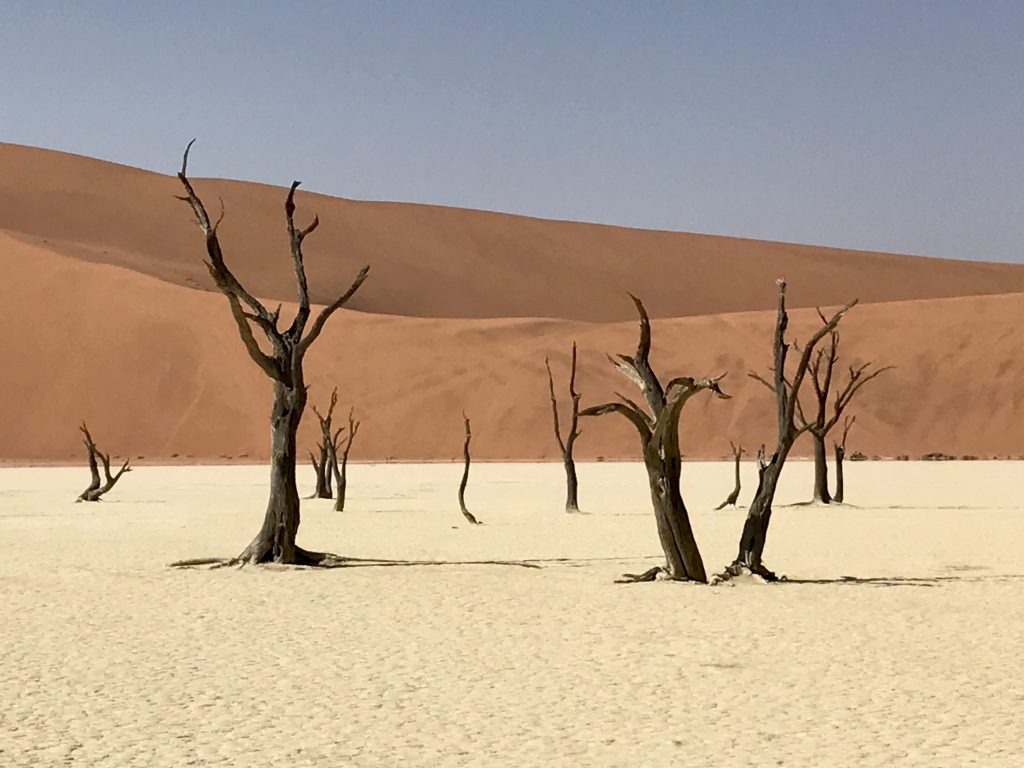 twisted black dead trees and white clay pan and orange sand dunes at deadvlei in namibia