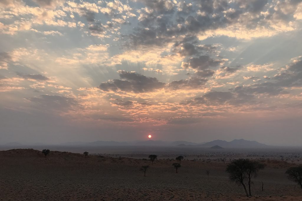 Sunrise over the dunes and acacia trees of the namibrand reserve area of the namib desert