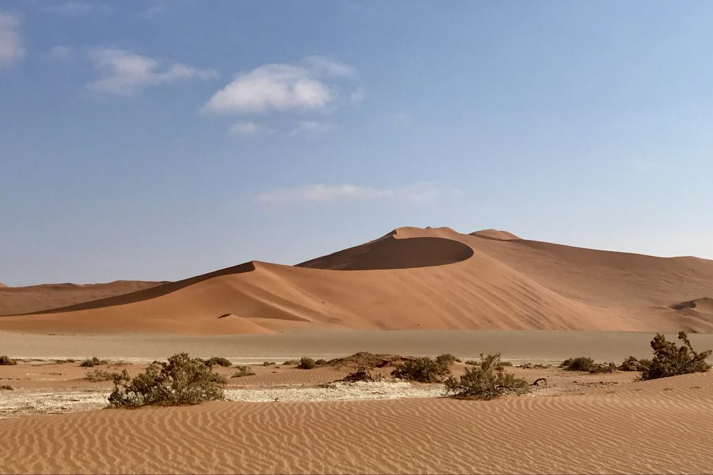 red curvy sand dune along the road to sossusvlei in the namib desert namibia