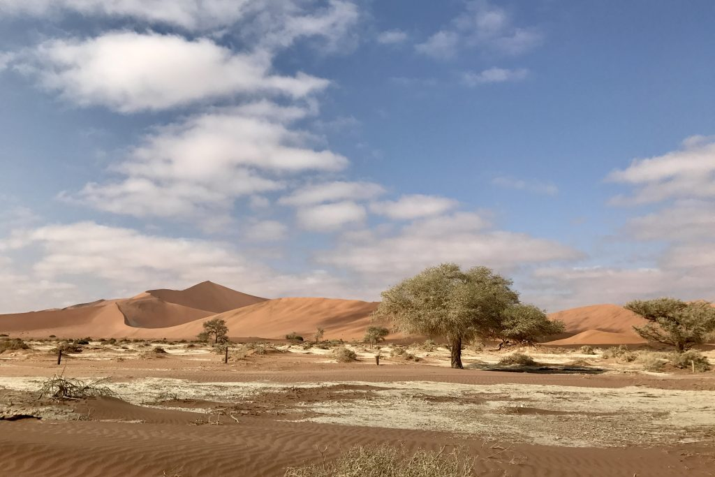 white clay ground sand dunes and acacia trees at sossusvlei in the namib desert