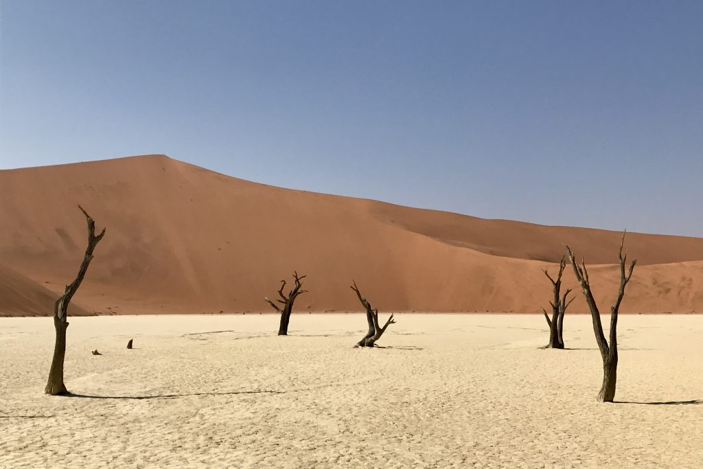 red sand dunes contrasting with white clay floor and dead black trees at deadvlei in the namib desert