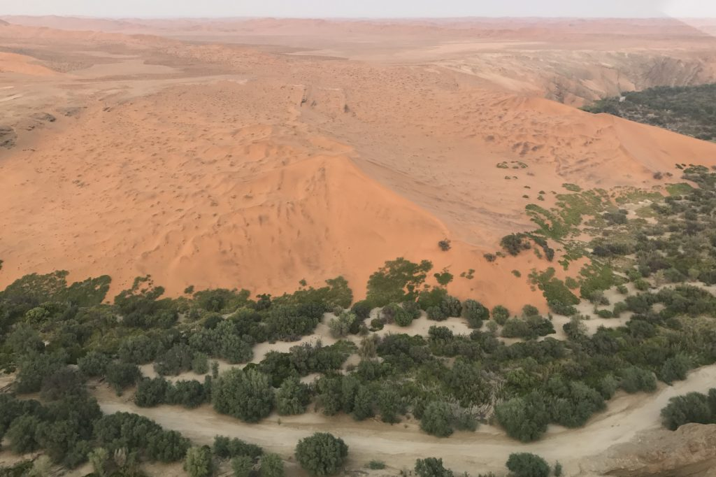 Red sand dunes tumble into the tree-lined river Kuiseb at the northern border of the namib desert sand sea