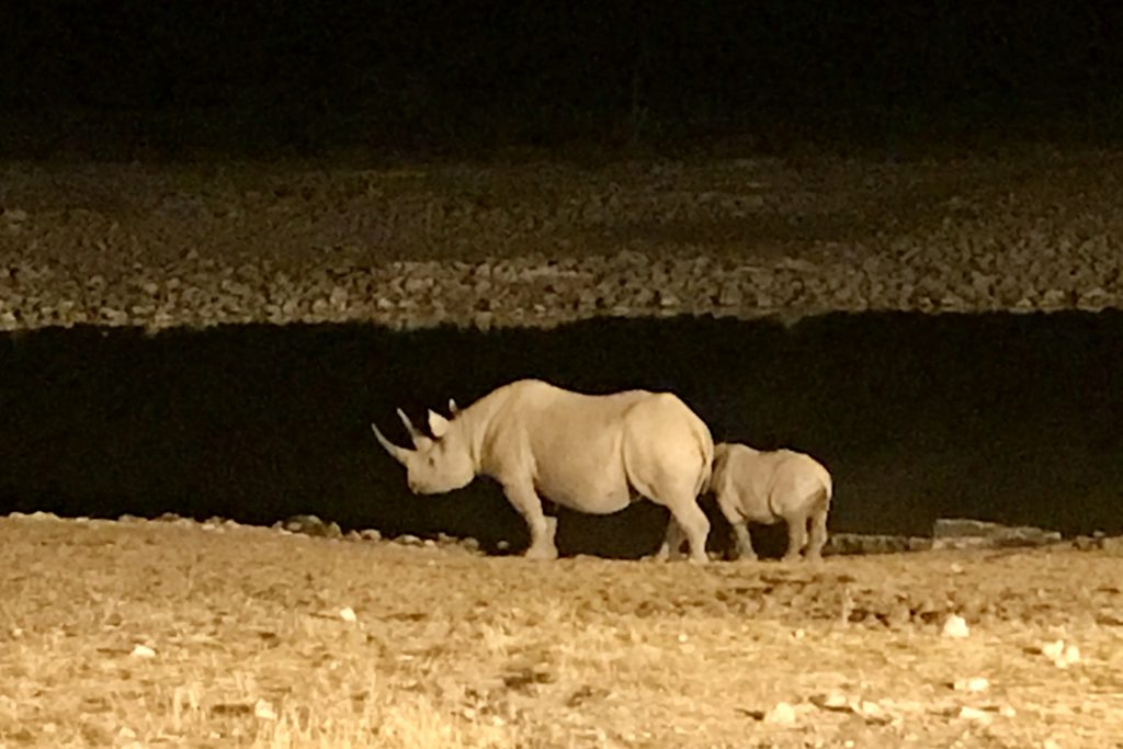 Rhino at a water hole at night in etosha national park in namibia
