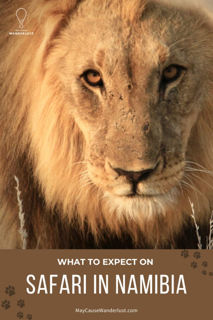 What to Expect on Safari in Namibia