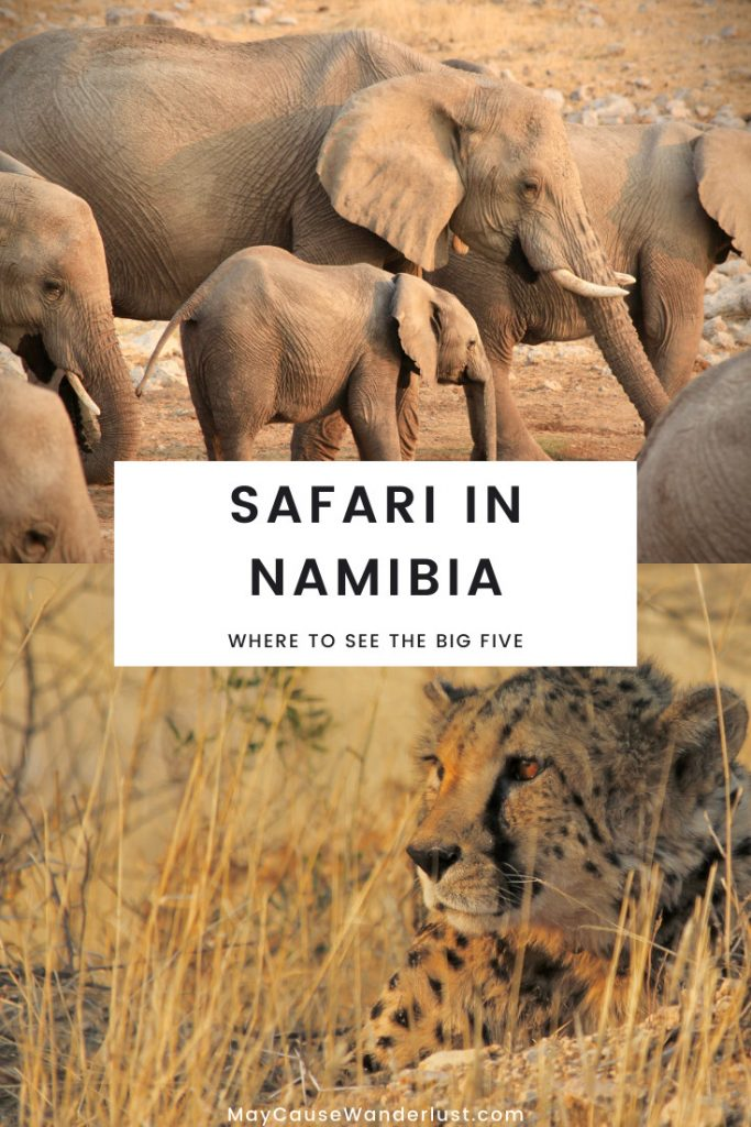 Sarafi in Namibia - where to find the Big Five - elephants and cheetah