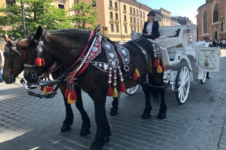 Horse & Carriages in Rynek Glowny, Krakow