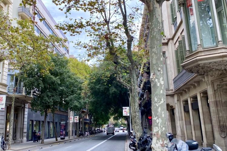 Tree-lined street in Eixample